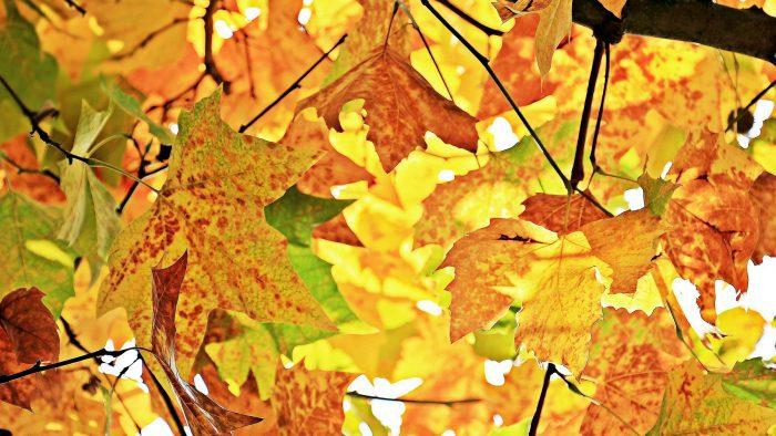 Galmpton Autumn Festival